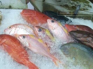 動物,魚,水族館,魚介類,魚製品