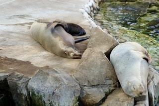 動物,動物園,お昼寝