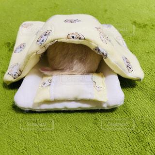 ハムスター,寝る,布団,枕,小動物,ハムケツ,頭隠して尻隠さず