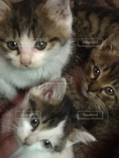 猫,動物,子猫