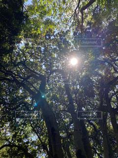 空,森林,屋外,日光,樹木,キャンプ,草木