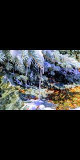 自然,動物,雪,海外,葉,樹木,絵画,クリスマス,Xmas