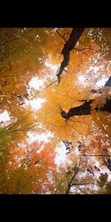 空,秋,樹木,落葉,草木,カエデ