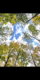 空,秋,屋外,雲,樹木,草木