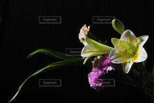 花,水,蘭,草木,フローラ