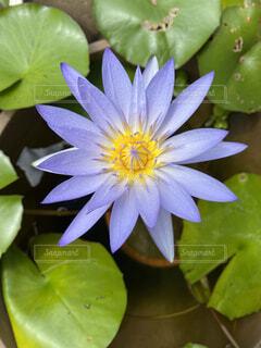 自然,花,水面,池,草木,フローラ
