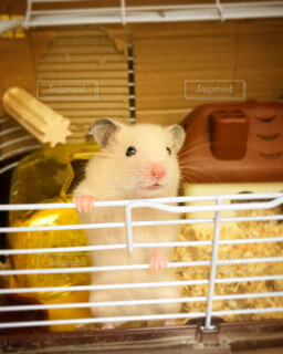 動物,ハムスター,屋内,ねずみ,ケージ,ラット,マウス,ネズミ,小動物フード