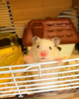 動物,ハムスター,バスケット,ねずみ,ケージ,マウス,ネズミ