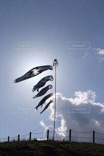 空,屋外,雲,鯉のぼり,子供の日