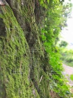 自然,屋外,樹木,草木