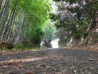 自然,屋外,樹木,地面,草木,パス