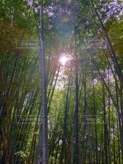 森林,屋外,樹木,草木