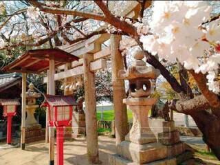 花,屋外,神社,樹木,草木