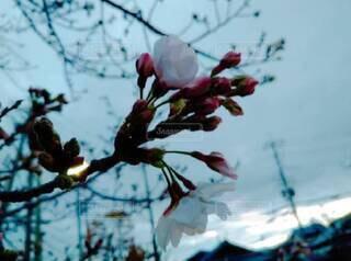 自然,空,花,樹木,草木,ブロッサム,支店