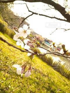 花,春,草