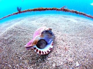 巻き貝と水色の海の写真・画像素材[4854554]
