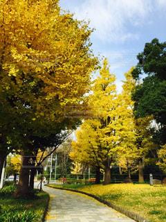 公園の木の写真・画像素材[1009481]