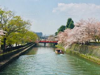 京都岡崎の桜と屋形船の写真・画像素材[2905896]