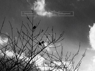 木の枝と鳥のシルエットの写真・画像素材[2905897]