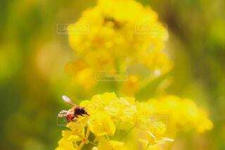 花,動物,蜂,昆虫,草木,花粉