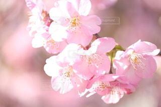 花,花びら,草木,ブルーム,ブロッサム