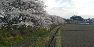 空,花,春,屋外,景色,草,樹木