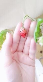 食べ物,屋内,手,果物,人物,人,イチゴ,リンゴ,自然食品