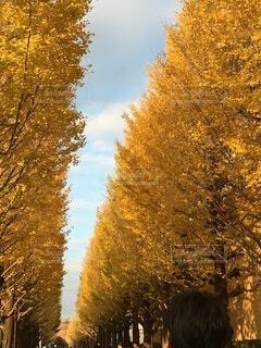 自然,空,秋,紅葉,屋外,樹木,草木