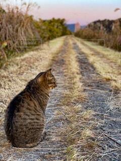 猫,動物,屋外,草,朝,野良猫,土手,孤独,ノラ猫,野生,たたずむ猫