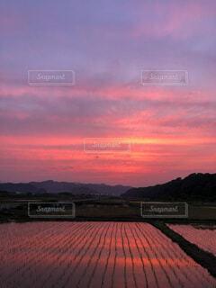 燃える空と田んぼの写真・画像素材[4822094]