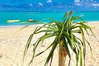 自然,空,屋外,砂,ビーチ,水面,海岸,地面,ヤシの木,熱帯