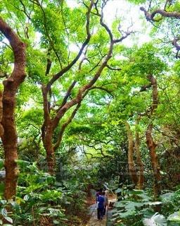 屋外,葉,沖縄,樹木,ジャングル,斎場御嶽,草木