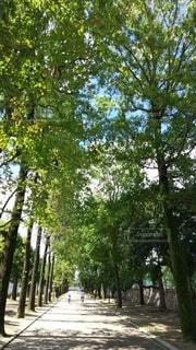 空,公園,屋外,葉,樹木,草木
