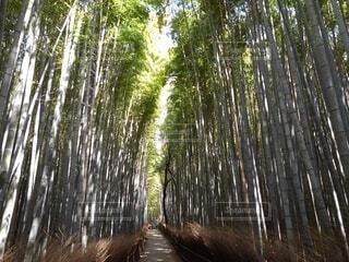 風景,観光,竹,竹林,嵐山,bamboo forest