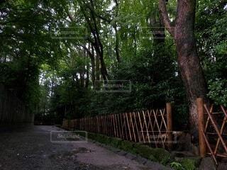 風景,公園,木,屋外,草,樹木,裏道,鶴岡八幡宮,草木,不気味