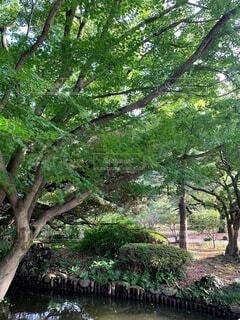 公園,屋外,夕暮れ,葉,景色,樹木,草木,ガーデン,初秋