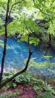 自然,風景,森林,屋外,湖,青,水面,草,樹木,絵画,草木
