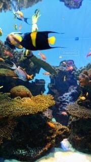 水中の色鮮やかな熱帯魚の写真・画像素材[4825713]