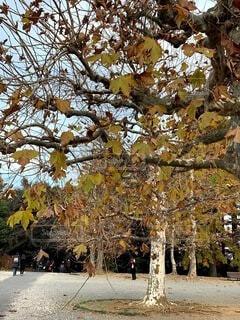 空,公園,秋,屋外,散歩,黄色,葉,樹木,草木
