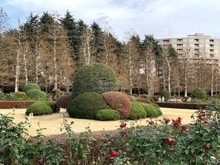 空,公園,花,屋外,バラ,樹木,草木,ガーデン