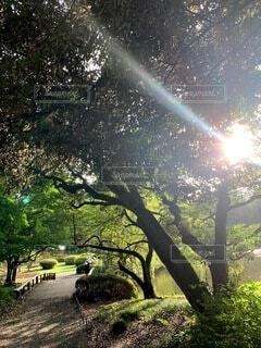 自然,空,公園,屋外,夕暮れ,散歩,木漏れ日,樹木,草木