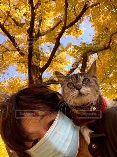 猫,自然,動物,青空,散歩,樹木,人物,人,銀杏,黄葉