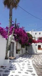 空,花,夏,屋外,ピンク,白,青空,家,樹木,石畳,ギリシャ,ブーゲンビリア