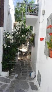 花,夏,屋外,白,家,植木鉢,石畳,観葉植物,ギリシャ,小径,草木