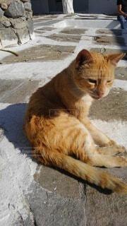 猫,夏,動物,屋外,白,オレンジ,石畳,座る,地面,寛ぐ