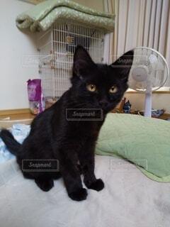 黒猫の写真・画像素材[4840033]