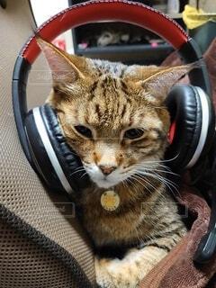 猫,動物,屋内,かわいい,オシャレ,可愛い,お洒落,ネコ科,おしゃれ