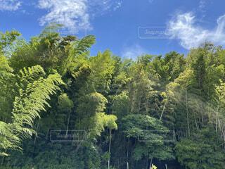 自然,風景,空,森林,屋外,雲,樹木,草木