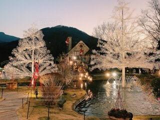 自然,冬,屋外,樹木,イルミネーション,キラキラ,クリスマス,サンタクロース,明るい