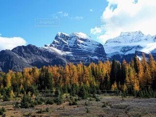 風景,空,秋,絶景,屋外,雲,青空,雪山,山,大自然,旅行,ハイキング,カナダ,国立公園,氷河,カナディアンロッキー,バンフ,黄葉,北米,ラーチ